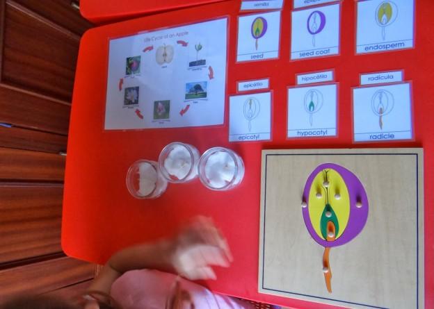 Puzzle semilla más experimento.// Seed puzzle +experiment